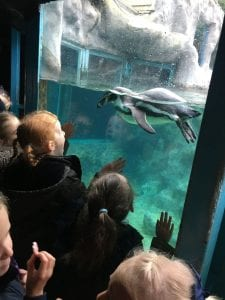 Harlow Primary Students see penguin at Colchester Zoo